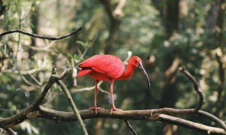 Ekoturistika Vám umožní pozorovat krásnou přírodu.