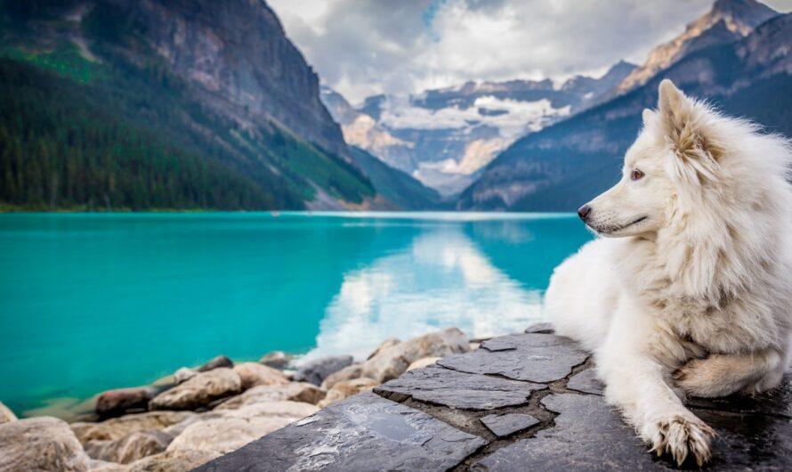 Pes je věrným parťákem na jakékoliv dovolené