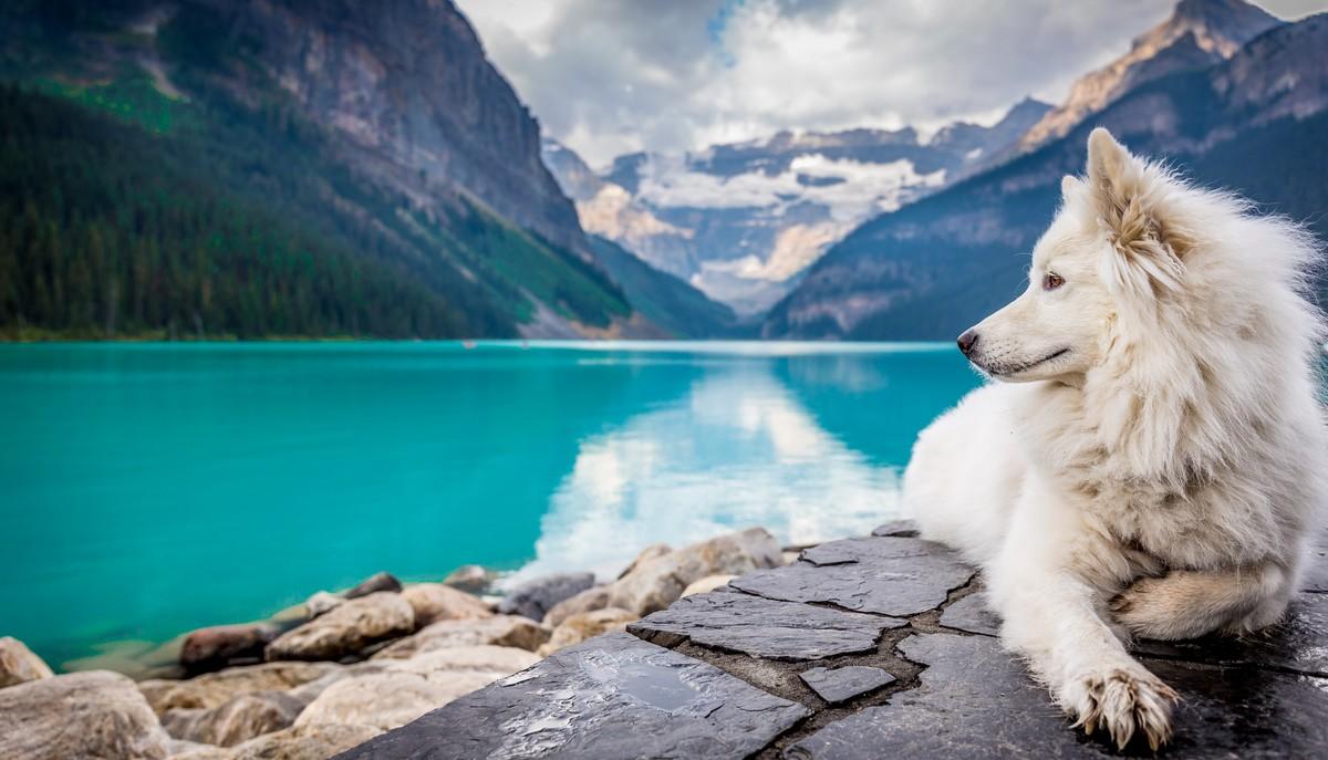 Pes ležící u horského jezera na dovolené.